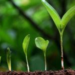 芝生の種類によって苗から植えるものと種から植えるものがある