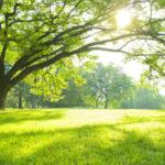芝生の種まきに優れた時期と種の蒔き方