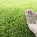芝生を種から栽培するならいつの時期